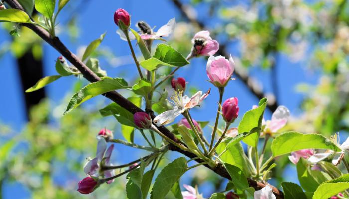 עץ עם פרחים ישראל גולדברג בדרך לכותל