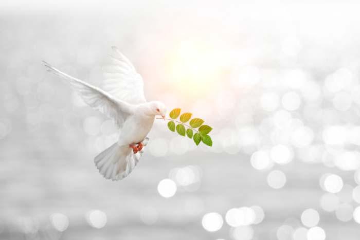 השלום הנכסף